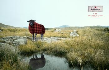 Woolrichreflection.jpg