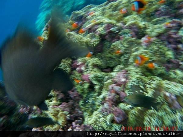 蘭嶼浮潛6.jpg