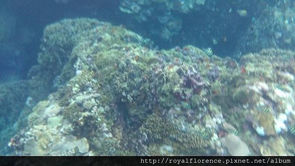 蘭嶼浮潛12.jpg