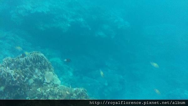 蘭嶼浮潛9.jpg