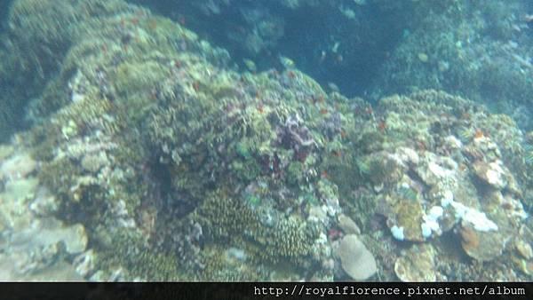 蘭嶼浮潛13.jpg