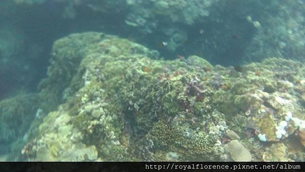 蘭嶼浮潛11.jpg