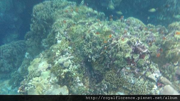 蘭嶼浮潛15.jpg