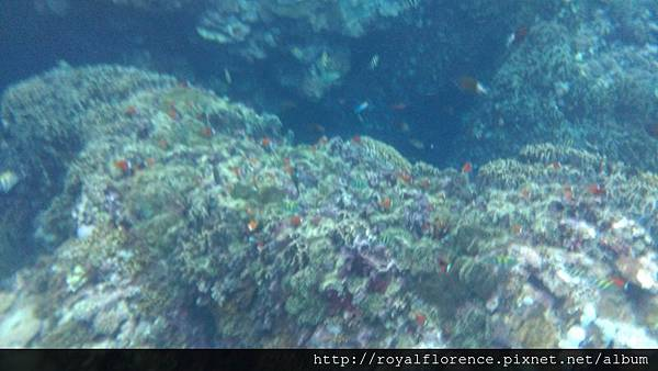 蘭嶼浮潛16.jpg