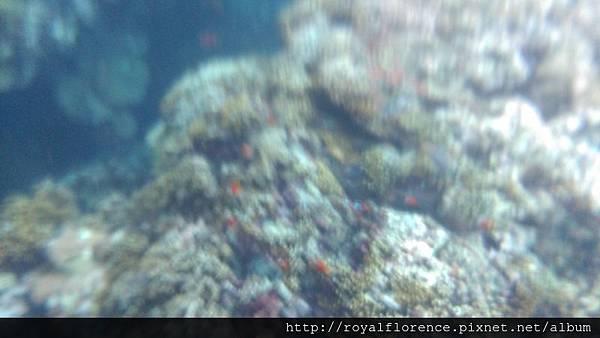 蘭嶼浮潛19.jpg