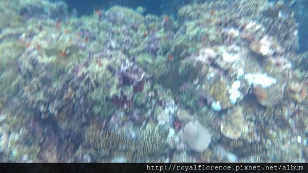 蘭嶼浮潛20.jpg
