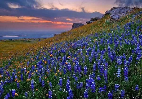 山中驚魂IV_藍色花朵.jpeg