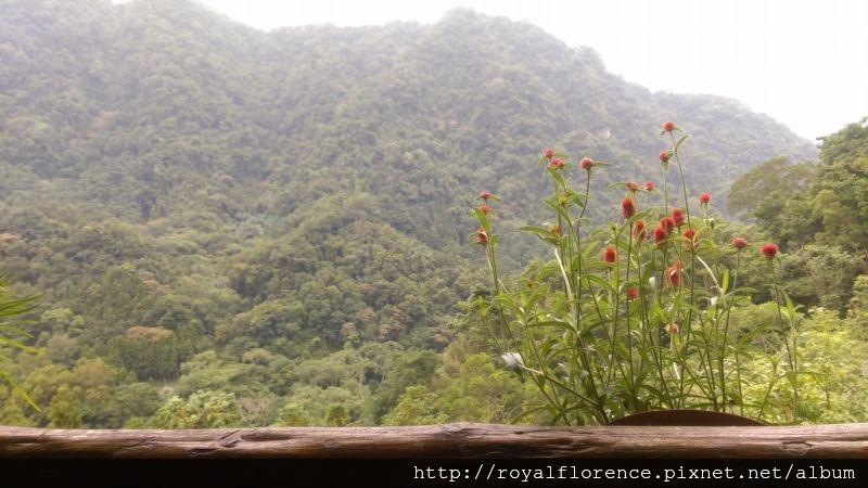 山形玫瑰_27.jpg