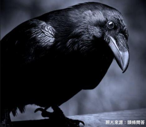 烏鴉報喪鳥.png