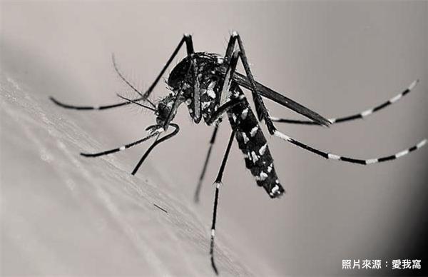 蚊子.jpeg