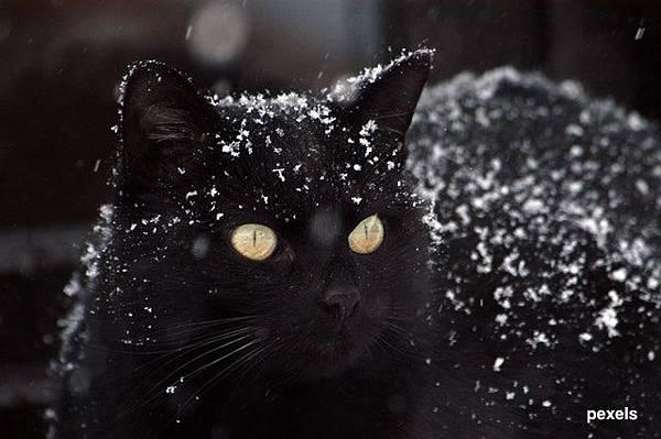 black_cat_黑貓.jpeg
