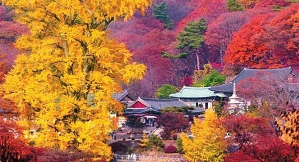 韓國紅葉2017, 韓國紅葉2017預測, 韓國楓葉時間, 韓國楓葉時間2017, 韓國銀杏時間, 首爾銀杏, 龍門山