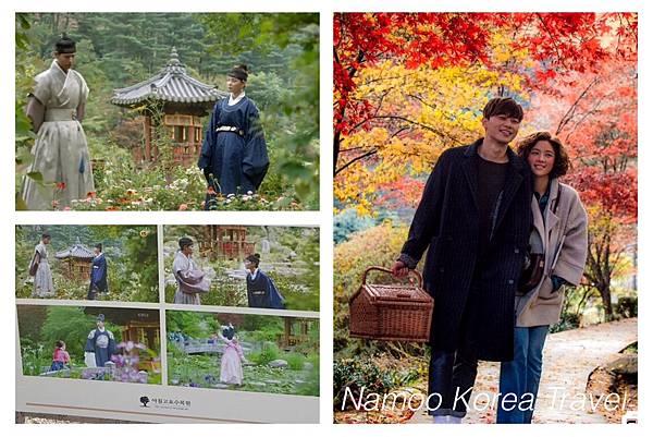 韓國紅葉2017, 韓國紅葉2017預測, 韓國楓葉時間, 韓國楓葉時間2017, 韓國銀杏時間, 首爾銀杏, 晨靜樹木園