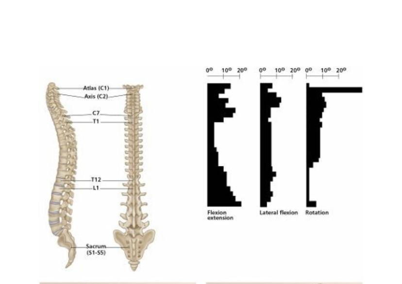 T-Spine_ROT1.jpg