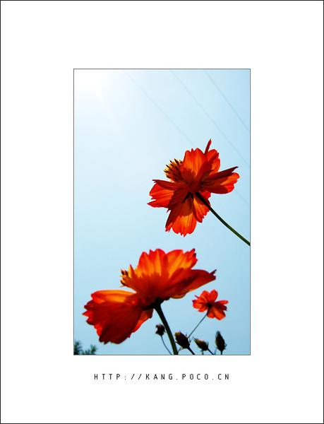 flower030.jpg