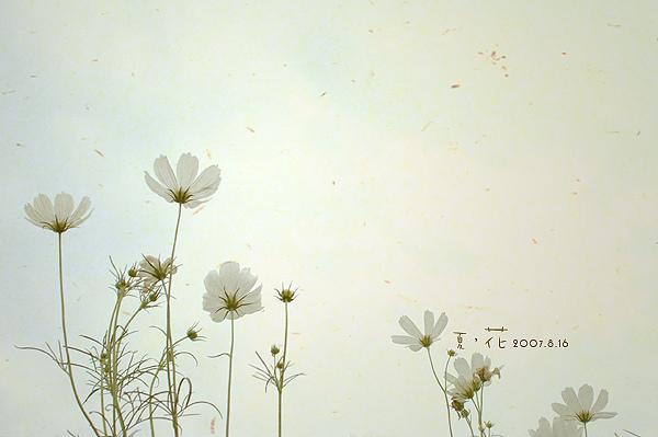 flower012.jpg