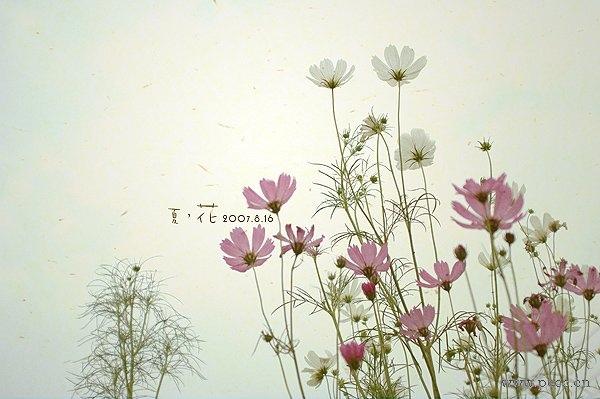 flower014.jpg