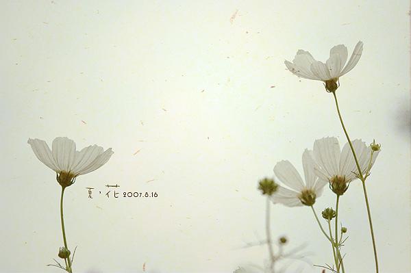 flower015.jpg