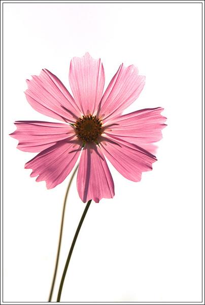flower019.jpg
