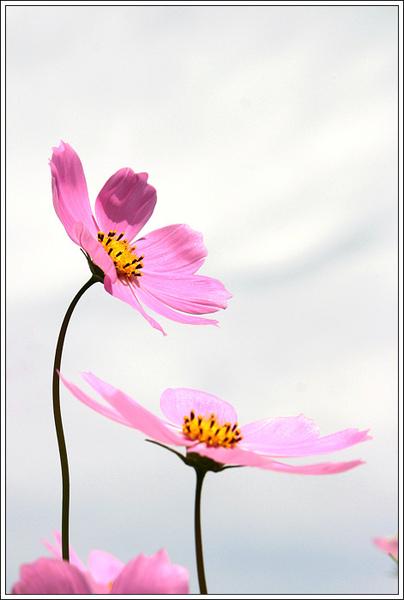 flower020.jpg