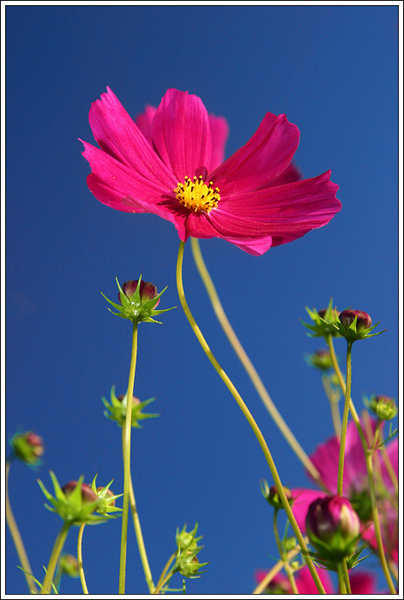 flower022.jpg