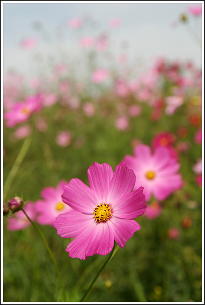 flower023.jpg