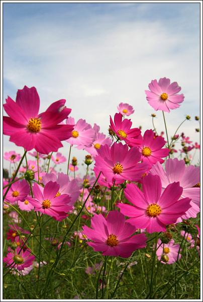 flower024.jpg