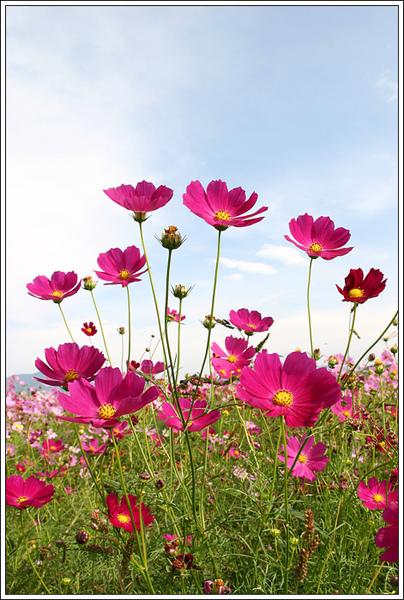 flower026.jpg
