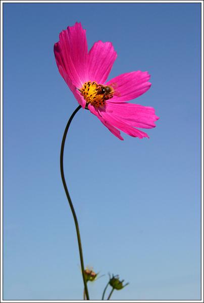 flower027.jpg