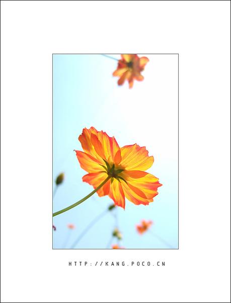 flower028.jpg