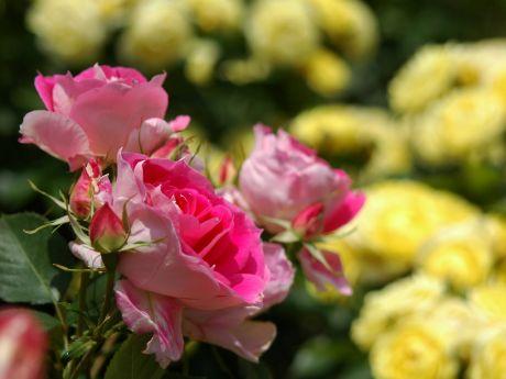 flower044.jpg