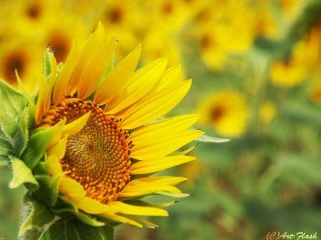 flower045.jpg