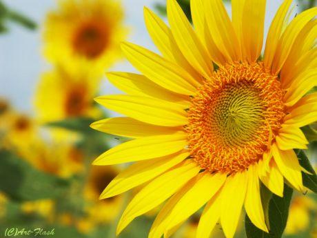 flower047.jpg