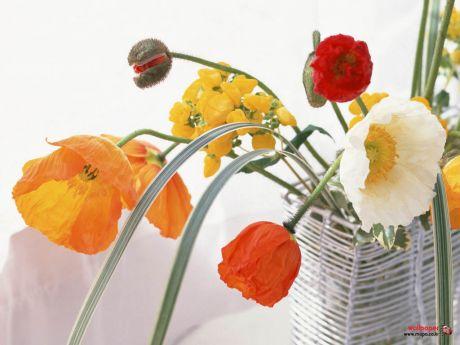 flower048.jpg
