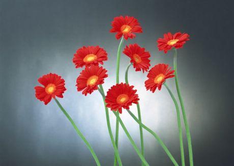 flower049.jpg
