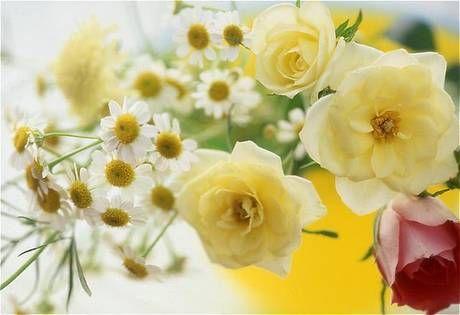 flower050.jpg
