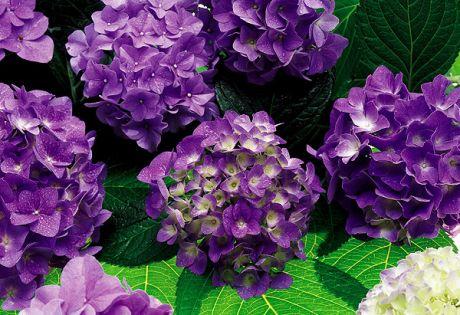 flower051.jpg