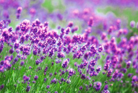 flower053.jpg