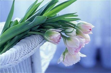 flower054.jpg
