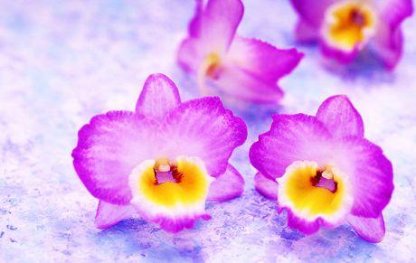 flower055.jpg