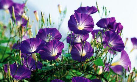 flower059.jpg
