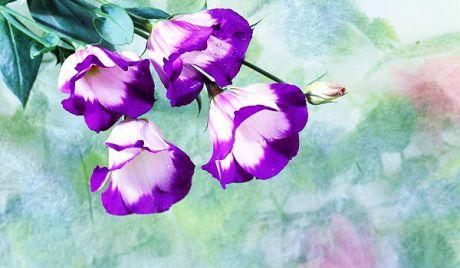flower060.jpg