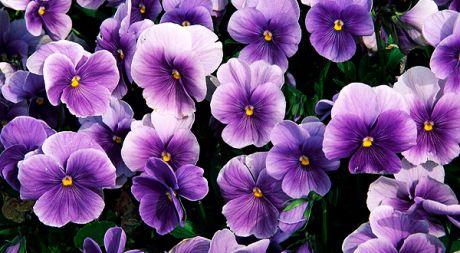 flower063.jpg