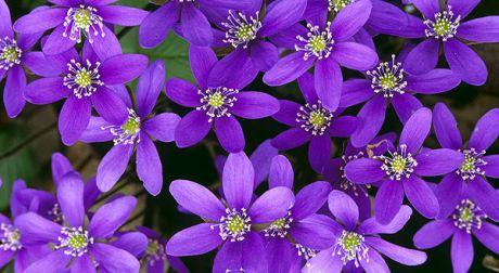flower064.jpg