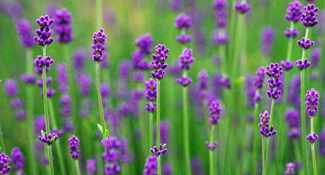 flower065.jpg