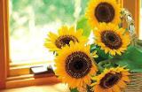 th_flower167.jpg
