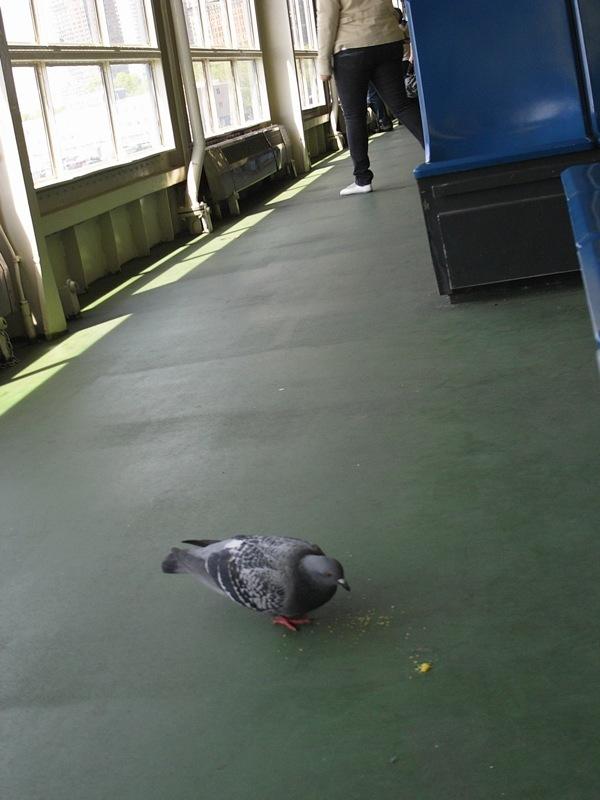 他居然飛近渡輪裡找吃的