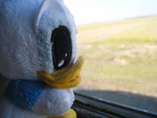 """唐老鴨:""""再過兩小時車程我就要到吳哥了~"""""""