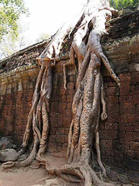 於是放棄了整修,但也成為塔普倫寺的特色