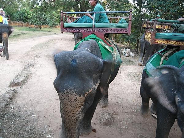 上山下山都可以選擇步行或者搭大象台客西